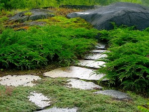North facing walkway with thyme, microbiota and moss on walkway to ledge ⓒ Michaela at TGE