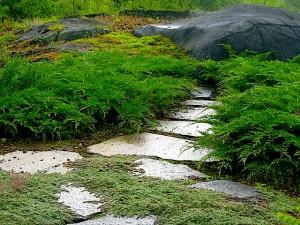 North facing walkway with thyme, microbiota and moss on walkway to ledge ⓒ Michaela at TGE