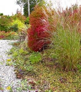 Entry walk with Viburnum trilobum, Miscanthus, Lindera b, Viburnum b, autumn perennials ⓒ Michaela at TGE