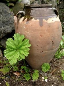 pot-indian-rhubarb-2