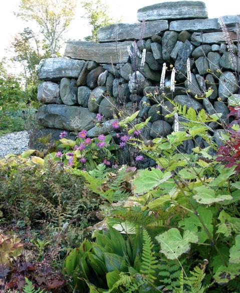 walled-garden-anemone