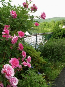 bridge-of-flowers