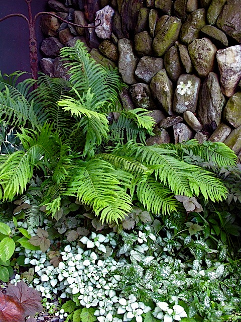 Fern In Courtyard