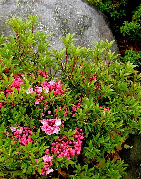 ¿Está su jardín en el marasme? Plantar estos árboles y arbustos para impresionantes flores de verano