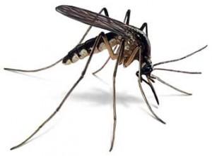 nasty-mosquitoes