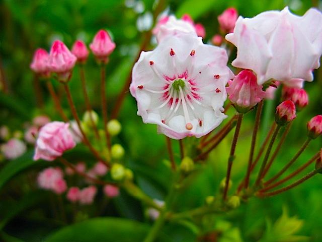 Grandes arbustos de verano para Blooming - Iowa - Reiman Gardens