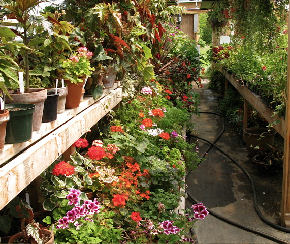 Plant hunting The Gardeners Eden – Rare Garden Plants