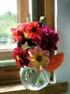 a bouquet of annual dahlias and calendula Walker Farm