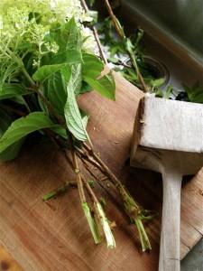 pounding woody stems