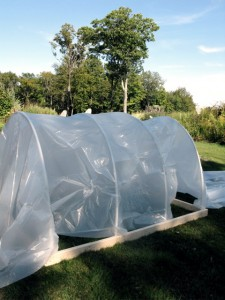 Hoop house stage 2