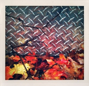 Bill Dwight Autumn Leaves and Metal