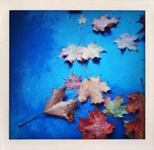 Bill Dwight Autumn Rhapsody in Blue
