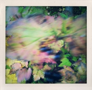 Bill Dwight Blurred Autumn
