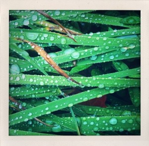 Bill Dwight Raindrops on Horizontal grass