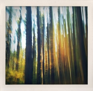 Bill Dwight, blurred vertical