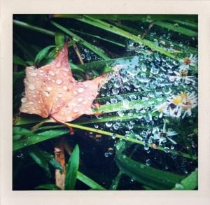 Bill Dwight - leaf and raindrops