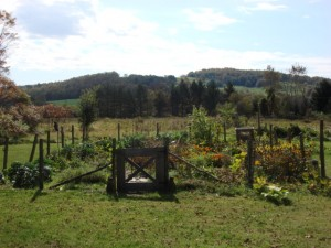 Cara's garden