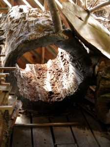 Holzapfel Hollowed Log