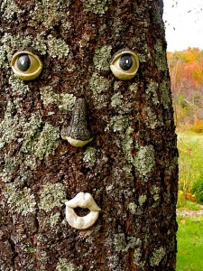 Holzapfel tree face