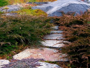Microbiota, Thyme, Moss, Path to Northwest meadow in autumn