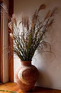 Miscanthus sinensis strictus (Porcupine grass)