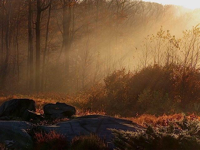 [Image: Morning-Light-at-the-edge-of-the-forest.jpg]