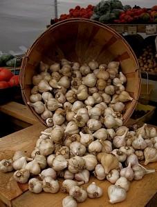 Music garlic in bin at festival