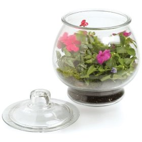 1 gallon terrarium
