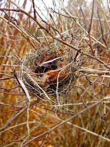 Empty Nest November small size
