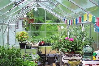 Virginia Wyoming, Greenhouse 1