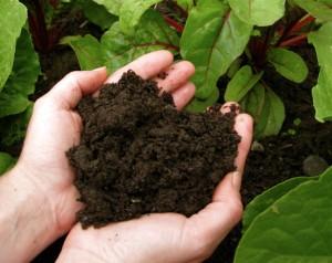 compost:hands