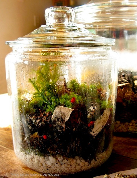 Terrariums With Native Plantings The Gardener S Eden