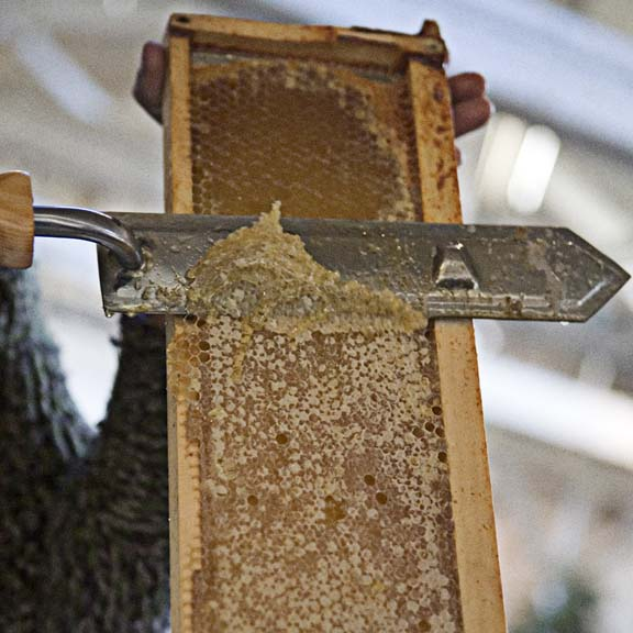 Honeybee: From Hive to Home Lessons from an Accidental Beekeeper The ...
