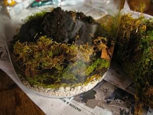 terrarium stage 3