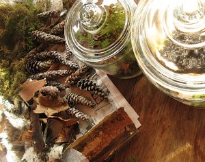 terrariums, gathered woodland materials
