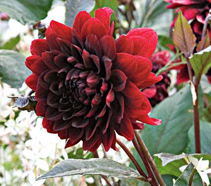 Paisaje con plantas de color negro | SA Jardín y Hogar