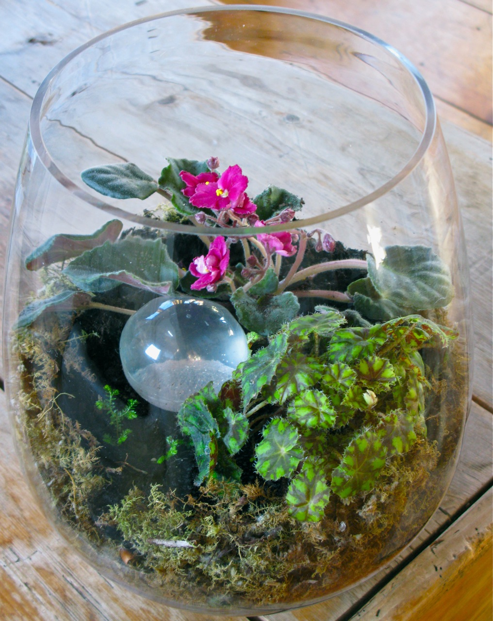 Lush Foliage For Low Light Rooms Terrarium Bowls Continued The
