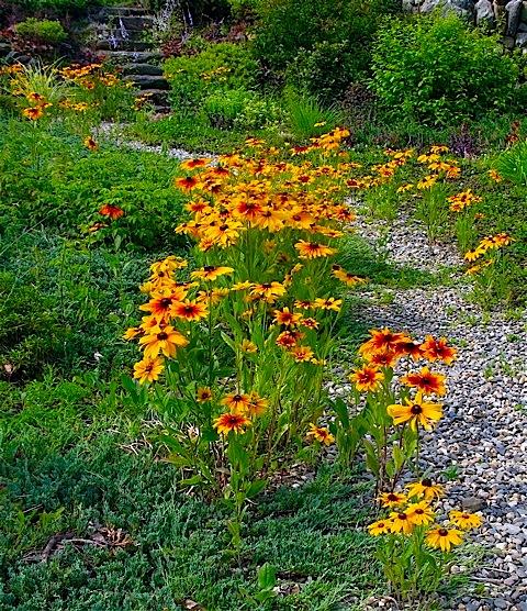 Wildflower Garden Design Ideas The Best Flowers Ideas