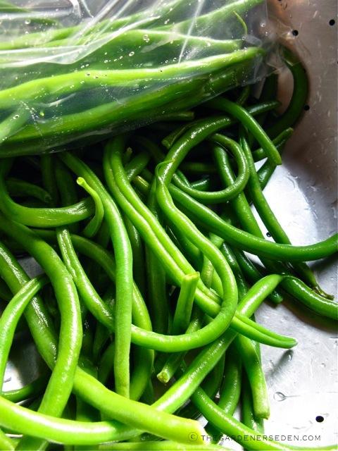 Haricots Verts - Blanching and Freezing ⓒ Michaela at TGE