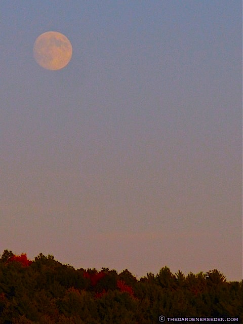 Harvest-Moon-September-2010-ⓒ-Michaela-at-TGE