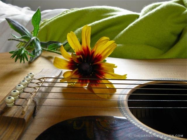 Wildflowers guitar chords
