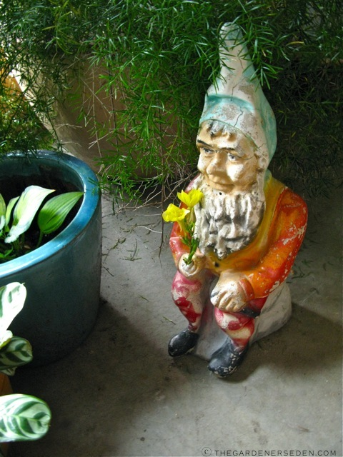 And A Sweet Garden Gnome ...