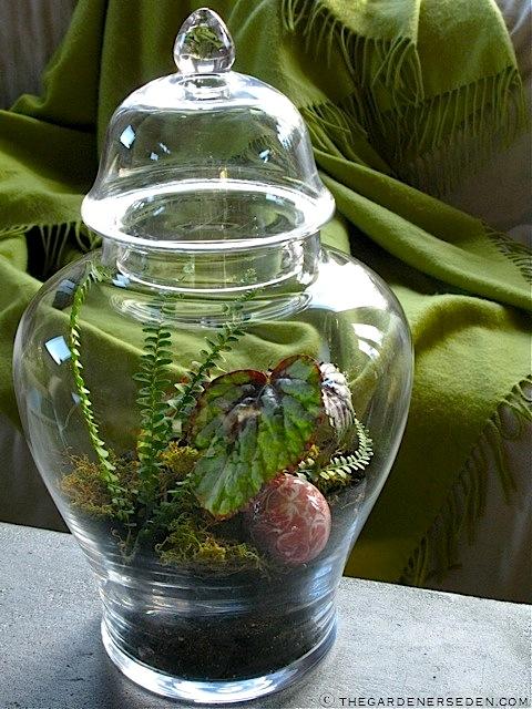Apothocary-Jar-Terrarium-ⓒ-Michaela-at-TGE - Terrariums The Gardener's Eden