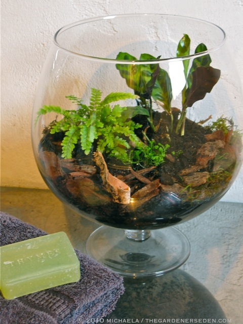 Insects And Disease In Terrariums The Gardener S Eden