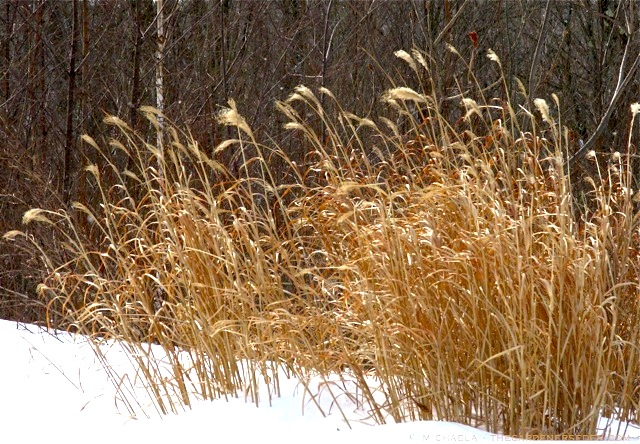 Ornamental grass in containers the gardeners eden of course i also enjoy looking at ornamental grass workwithnaturefo