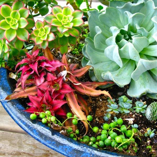 Succulents in containers the gardener 39 s eden for Indoor gardening diana yakeley