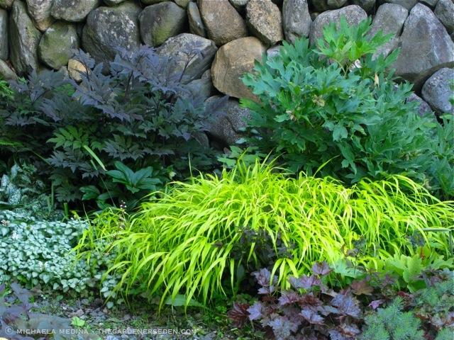 actaea simplex hillside black beauty the gardener 39 s eden. Black Bedroom Furniture Sets. Home Design Ideas