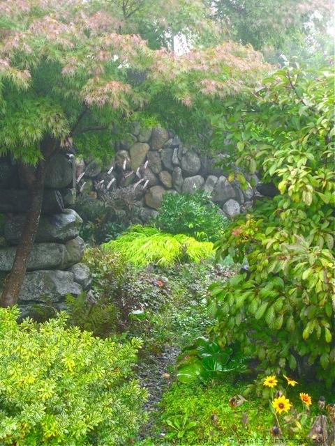 black plants the gardener 39 s eden. Black Bedroom Furniture Sets. Home Design Ideas