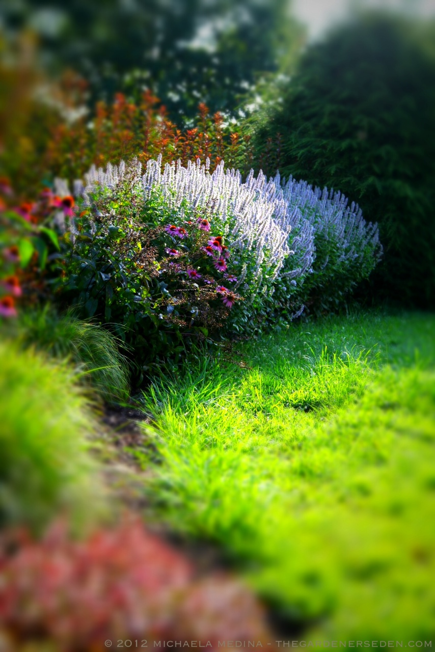 Cutting Edge Garden Maintenance Sharply Defining Beds Borders
