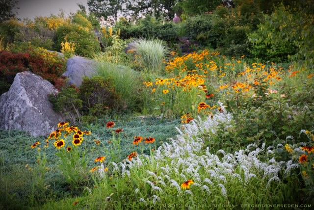 Wildflower Garden The Gardeners Eden - Wild flower garden